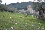 images/2013/monaster_hilandar_athos_spring/